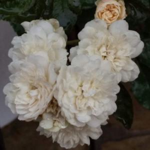 一番花の次は…。(^_^;)