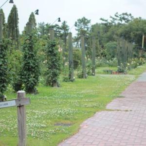 浜寺公園ばら庭園案内倶楽部の2020年6月度定例会。