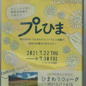 夏の植物園。