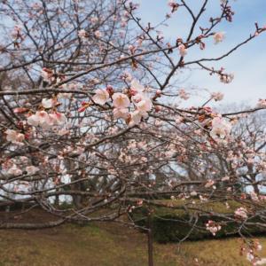 佐倉城 土塁と空堀が残る質素な城