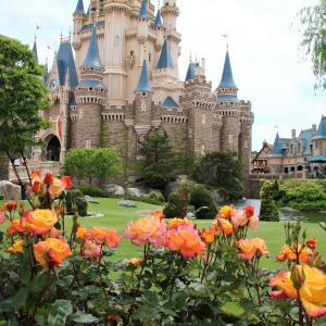今年の東京ディズニーランドのバラ