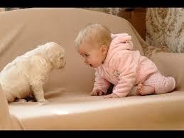 最強コンビの犬と赤ちゃんがやってくれました、赤ちゃんの笑いは止まるのでしょうか?