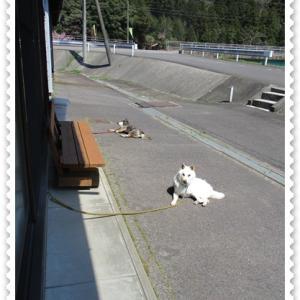 今が愛犬2匹にとって外でお昼寝する一番いい季節です。