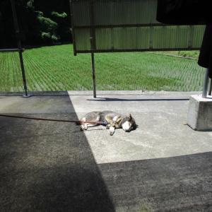 太陽の日差しをサンサンと浴びる場所で寝ています。
