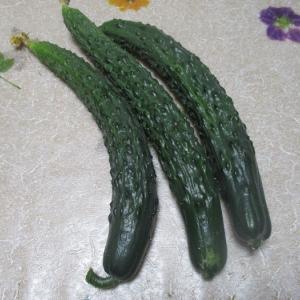 今年も夏野菜を食べて元気に過ごしてほしいです。