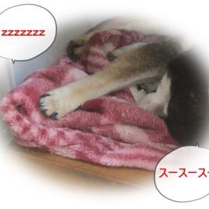 本当に気持ちよさそうにぐっすり眠っている姿にやすらぎを感じます。