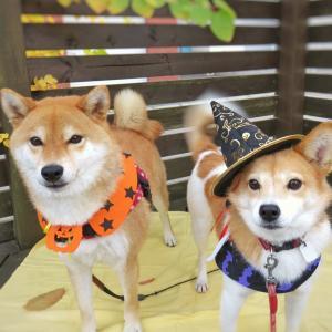 ハロウィン(Halloween)を英語で説明してみよう!おもてなしEnglish2.0