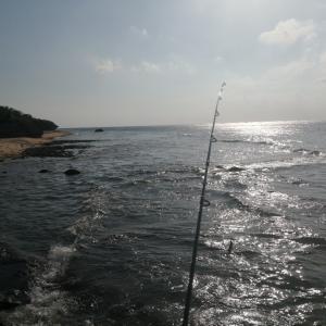 石垣島でアオリイカを釣ろう❗❗