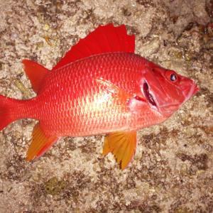 石垣島のリーフで夜釣り