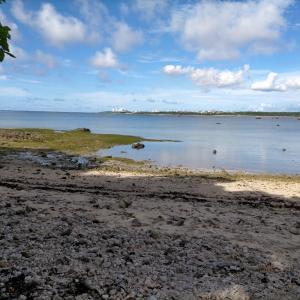 石垣島の河口で陸っパ釣り