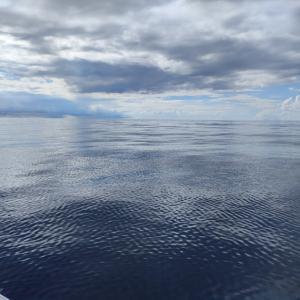 石垣島でリピーターさんと泳がせ釣り