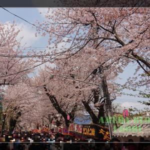 桜祭♪(動画宣伝ありw)