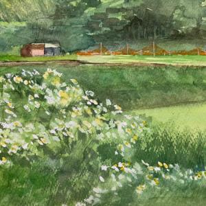 白い花の咲く田舎道