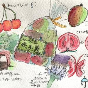 メモリーイラスト49  グリーンライチ、トマトの蝶々