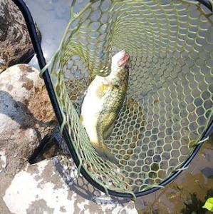 やっぱり釣れると楽しいな