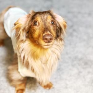 盲導犬との1分間のプチ物語☆
