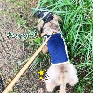 お目々にいいけど、、?!@ シジミンジャー活動〜
