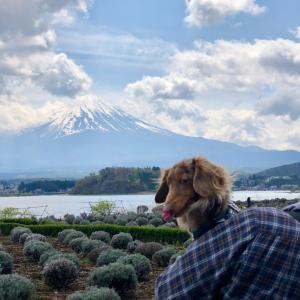 タリーの桜旅2021【河口湖篇】パンの番号札がkawaii@LAKE BAKE