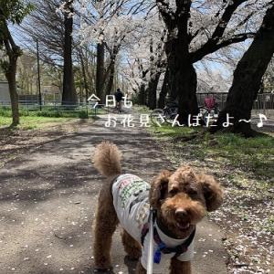 2019 善福寺川の花いかだ♪