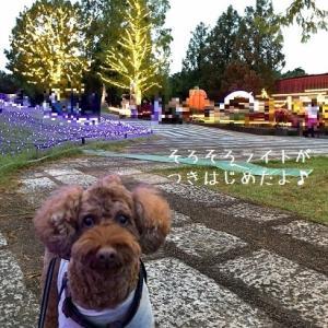 森のハロウィンナイト @ 武蔵丘陵森林公園(埼玉)