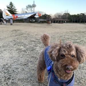 飛行機♪ @ 所沢航空公園