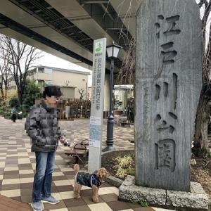 雨の日にお散歩できるとこ見つけちゃった♪ @ 江戸川公園(文京区)