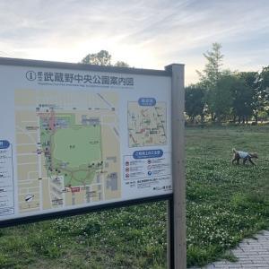 まだ行ったことがない公園シリーズ♪ 武蔵野中央公園