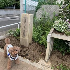 まだ行ったことがない公園シリーズ♪ 南長崎はらっぱ公園(豊島区)