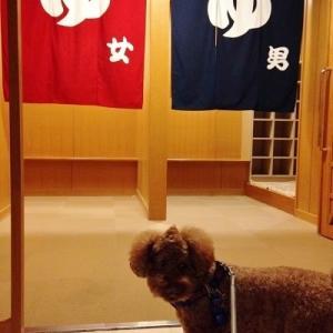 シュートと伊豆高原へ♪ <愛犬お宿 温泉&食事編>