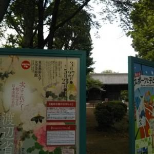 老育5 芸大美術館と上野動物園