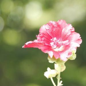八重の花びら,うれしい事