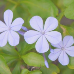 瑠璃色の花
