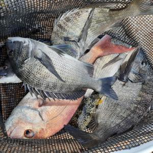 釣りイベントで井島へ!