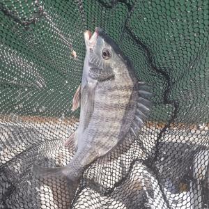 桜鯛を釣りに行く!