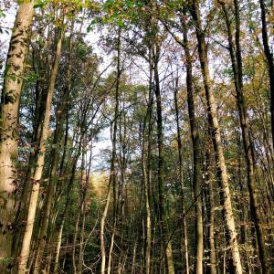 ドイツ旅行記4日目その1 ドイツの深い森に呪術の玉を埋めて一路ケルンへ