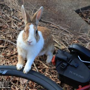 [写真]うさぎ島で撮影ポタ~ウサギと自転車