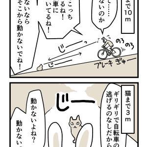 [4コマ&写真]今日の猫