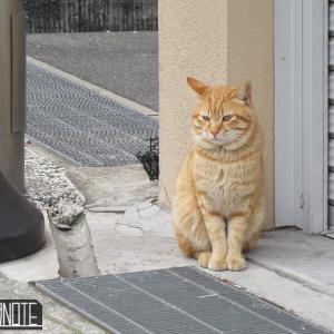 [写真]今日の猫 in尾道