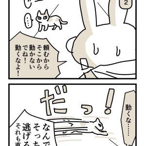 [日記4コマ]今日の猫x4