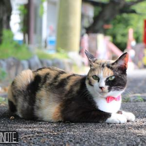 [写真]今日の猫いろいろ+α in 尾道