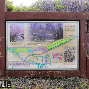 [写真]大三島藤公園で藤とロードバイク撮影試行錯誤
