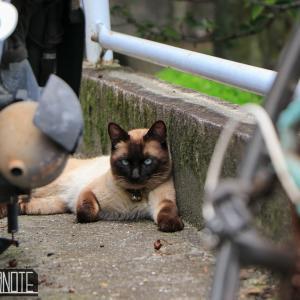 [写真+動画]尾道の猫6月編+街の様子