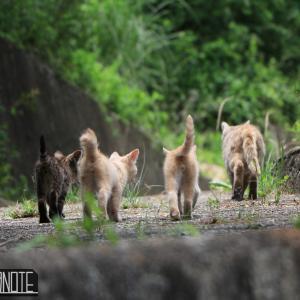 [写真]猫いろいろ