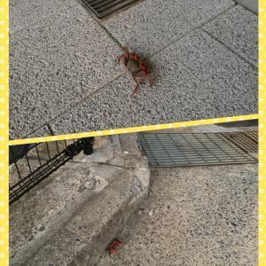 学校守衛物語ー64 《校内の蟹》