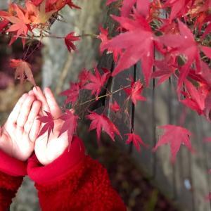 ✩期間限定!富士河口湖紅葉まつり&紅葉回廊✩