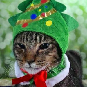 早く帰って飾りつけ!今日はクリスマスツリーの日