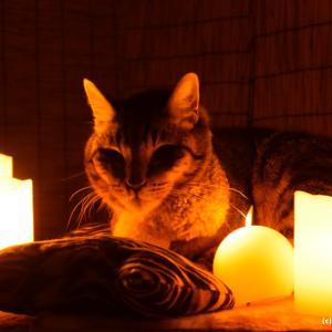 【実話】この猫可愛い!後で血の気が引いた【ゾッとする】