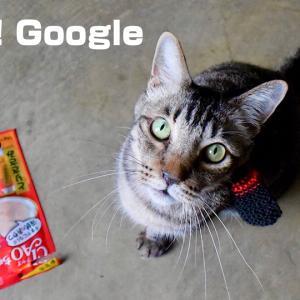 僕たちはGoogle検索に見放されたのかも知れない…