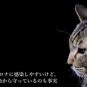 猫は新型コロナに感染しやすいけど、飼い主を感染から守っているのも事実