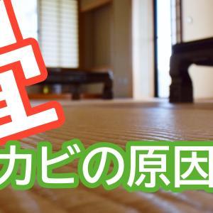 新築・アパート!畳のカビの原因は温度と湿度 対応策は換気のみ